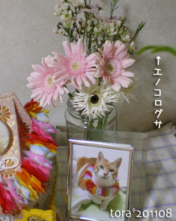 tora11-8-9.jpg