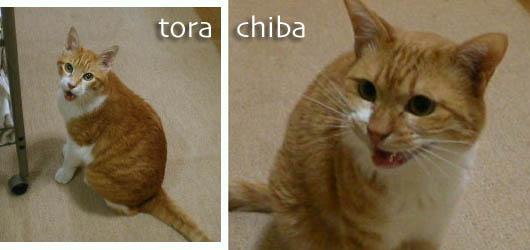 torachiba11-5-1.jpg