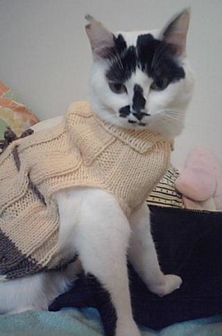 にゃんセーター ぷーちゃん
