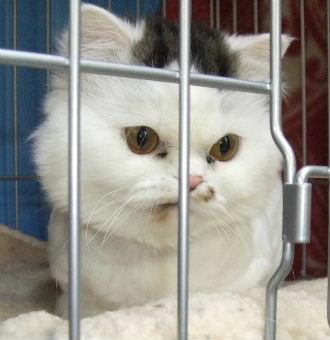 猫村くんDSCF3067