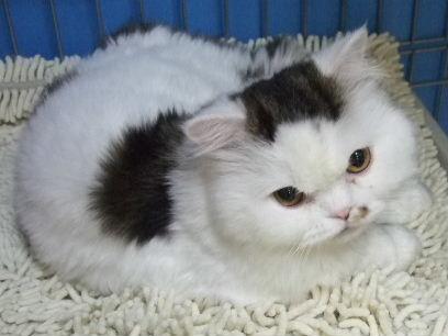 猫村くんDSCF1106