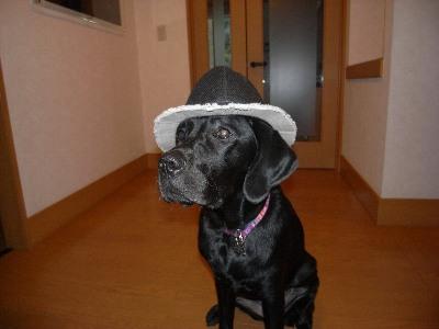 だいしの帽子