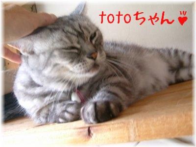 totoちゃん太った!?