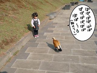 大きい鳥は苦手みたいです。