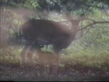 bambi10.jpg