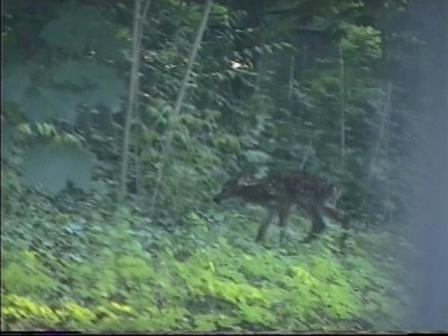 bambi5.jpg