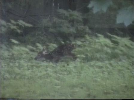 bambi7.jpg