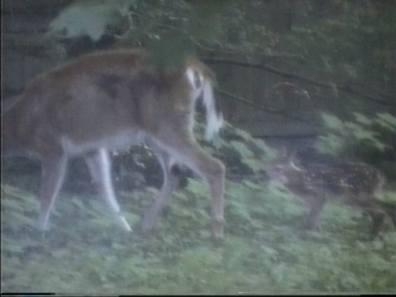 bambi8.jpg