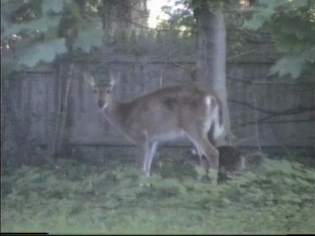bambi9.jpg