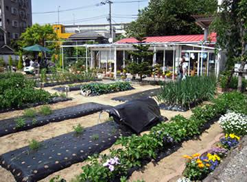 農園レストラン ハーブとおいしい野菜塾