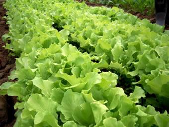 芦田農園 野菜