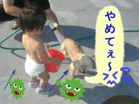 08153_convert_20080817121409.jpg