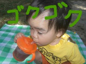 08213_convert_20080821210220.jpg