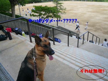 raiari+344_convert_20090712234340.jpg