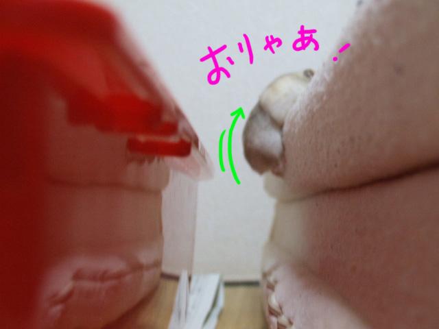 DSCF17544.jpg