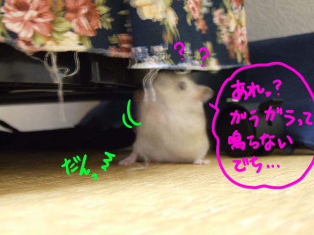 DSCF18262.jpg