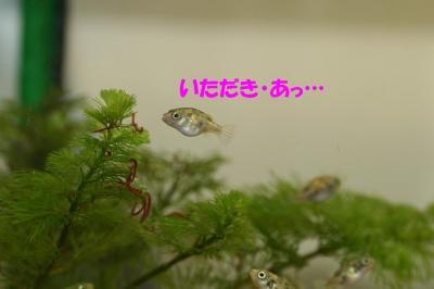 赤虫のなる木?②