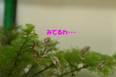赤虫のなる木?③