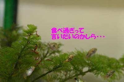 赤虫のなる木?④