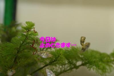赤虫のなる木?⑤