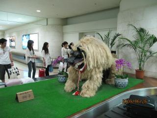 石垣島の獅子