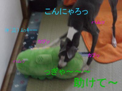 1_convert_20090616144321.jpg