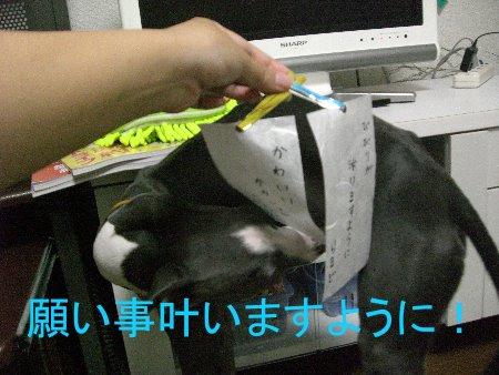 七夕らるど