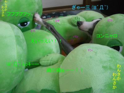 9_convert_20090616144851.jpg