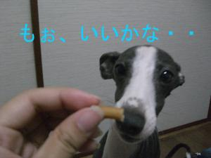 CIMG2597_convert_20090606205320.jpg