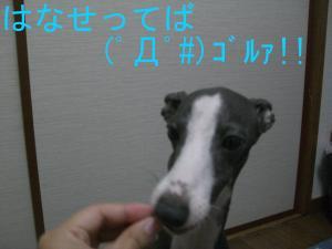 CIMG2608_convert_20090606205819.jpg