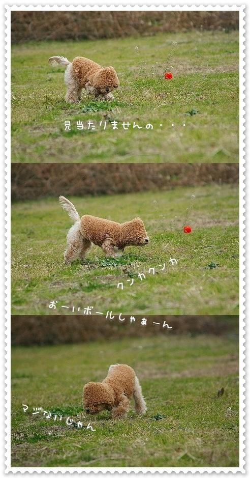 20081229_7825-verta.jpg