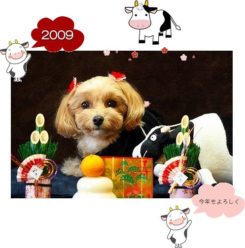 20090101_6997aaa1.jpg