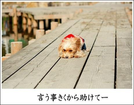20090124_1083a.jpg