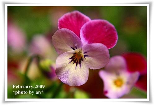20090206_2585a.jpg