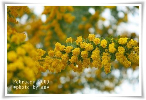 20090225_5809a.jpg