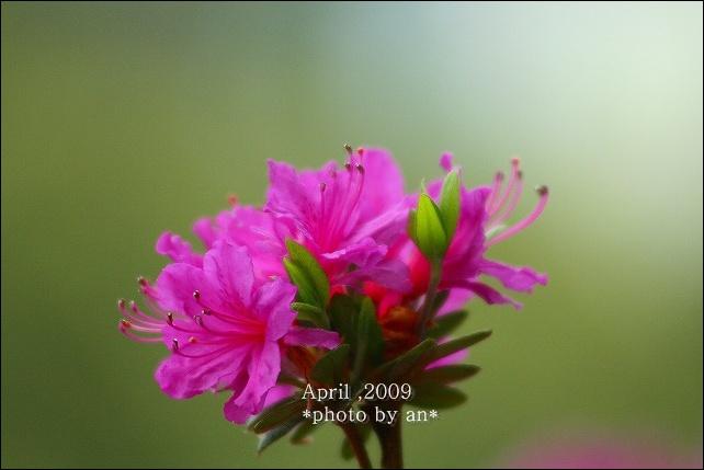 20090416_2509.jpg