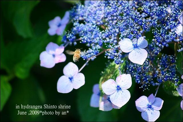 20090507_1225.jpg