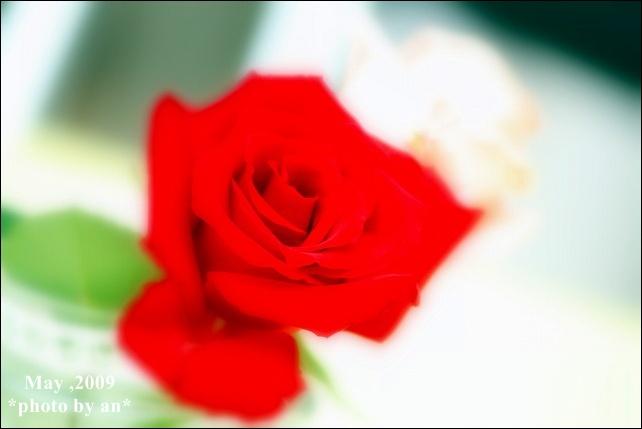 20090516_8834.jpg