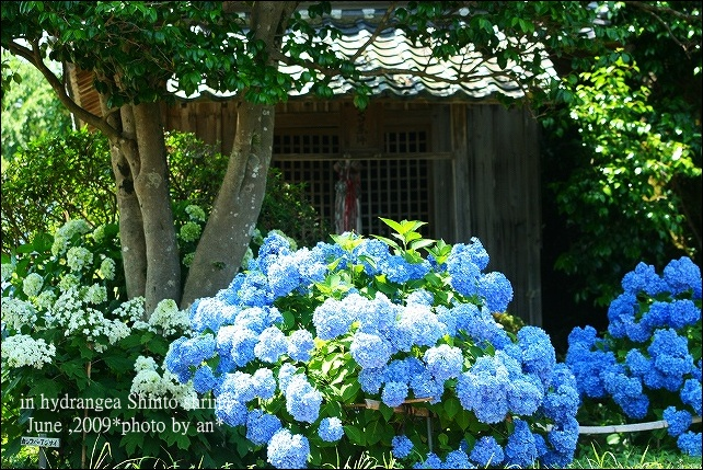 20090607_1169.jpg
