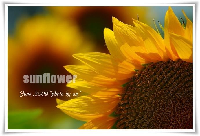 20090616_2937.jpg