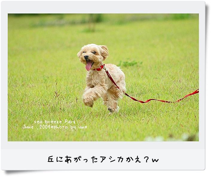 20090621_3525.jpg