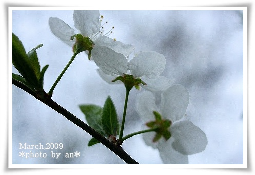 IMG_6688a.jpg