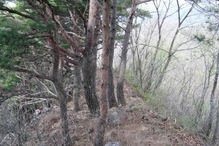 虚空蔵山城跡 (6)