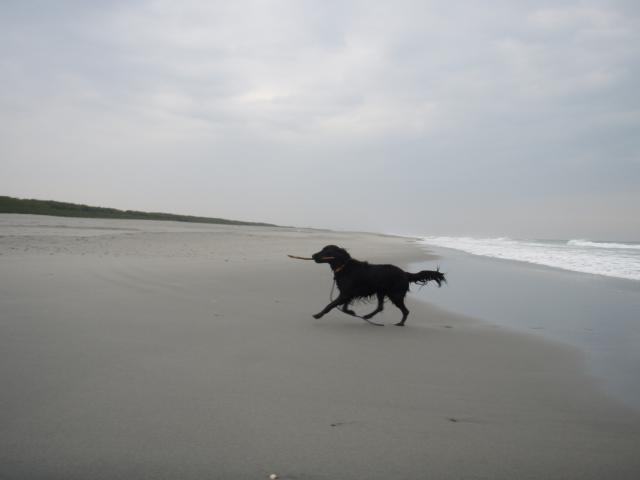 3・13 遠州灘