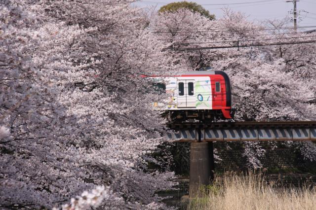 4・3 桜と電車