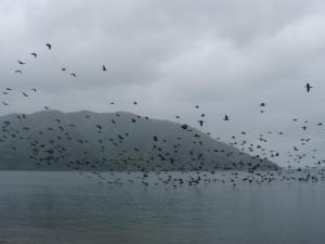 5・14 鳥の群れ