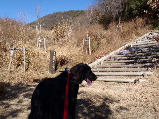 山歩きラン