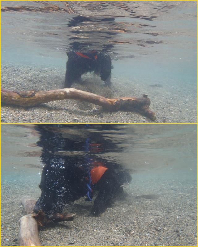 2011・8・6 潜水