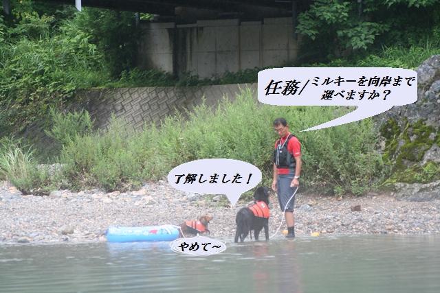 2011.8.6 運搬犬