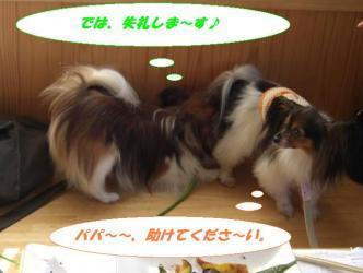 13-03_20080817134608.jpg